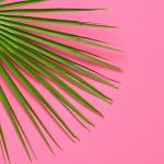Tropical Fresh Fan Palm Leaf. Summer. Minimal
